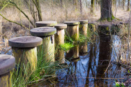 Steppingstones across a pond in the wilderness photo