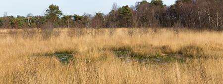 Swamp in national park De Groote Peel in The Netherlands Stock Photo