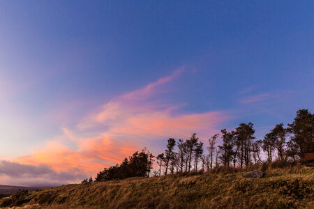 Treeline at sunset in Wicklow Mountains photo