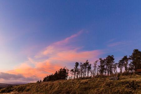 treeline: Treeline at sunset in Wicklow Mountains