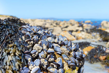 macroscopic: Lots of clams attached to a rock