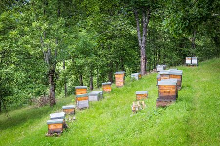 manmade: Apiary with several man-made beehives in the Pyrenees