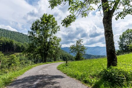 backroad: Curving backroad with a tree on a sunny day in the Pyrenees Stock Photo
