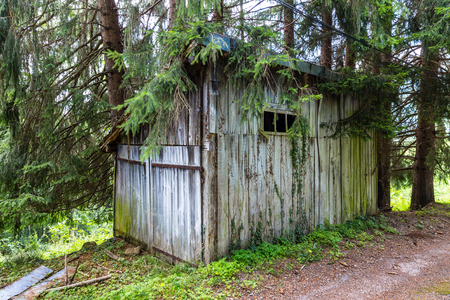 Overgrown wooden shed in a forest in the Pyrenees in France photo