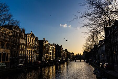canal houses: Amsterdam canal and the canal houses with a flying seagull on a winter day
