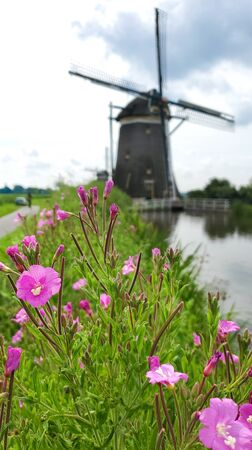 Wild flowers and a Dutch windmill in the background illustrating a nice day out in Netherlands nature