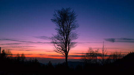Silhouette of a tree in front of the Sunset