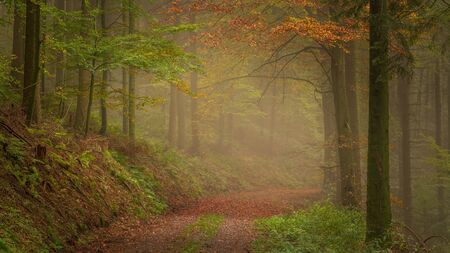 Autumn is coming in the Black Forest