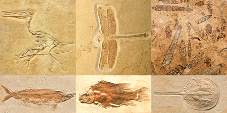fossils: Fossils