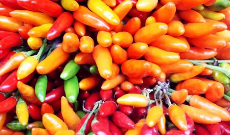 Colorful and different hot peppers Stock Photo - 11274404