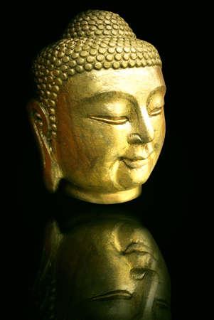 a beautiful golden head Stock Photo - 12544781