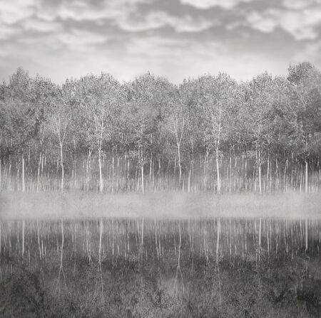 black and white forest: Beautiful landscape of a woods of poplar reflected in the water with foggy and cloudy sky in black and white Stock Photo