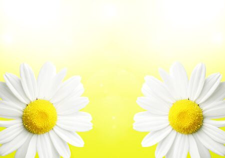 pureness: Colorful yellow background with two daisy flowers