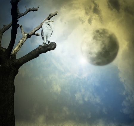 Beautiful artistic background representing a barn owl on a tree with beautiful sky with planets on the background