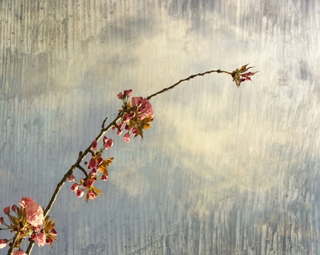 Beautiful artistic background of a branch and flowers of a peach tree in the sky  Stock Photo - 17060083
