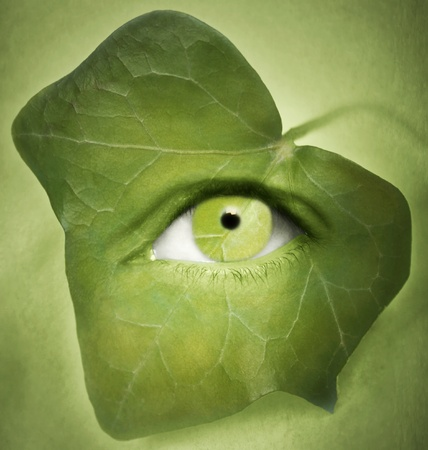 Detail of a human eye with an ivy leaf around it Stock Photo - 17445264