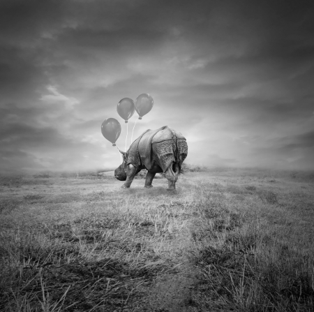 Fantasy artistic rhino back with three balloons outside on a meadow and a cloudy sky in black and white photo