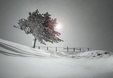 Tree on a hill covered with snow during a snowfall in black and white photo