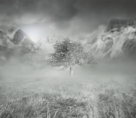 fog white: Beautiful artistic background representing a isolated tree in the fog with mountains and cloudy sky in the background  in black and white