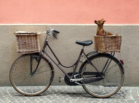 Detail van een parkeerplaats fiets met twee mand met een chihuahua hondje binnenkant van een van hen