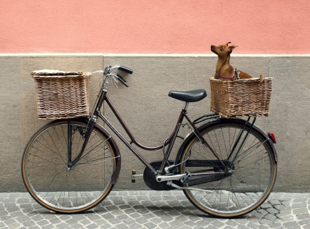 Detail of a parking bicycle with two basket with a chihuahua little dog inside of one of them Standard-Bild