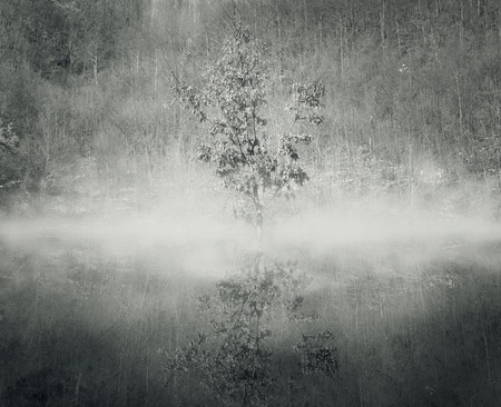 black and white forest: A tree in the mist with its reflection in the water and a forest on the background in black and white Stock Photo