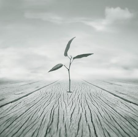 Mooi beeld poëtische zwart-wit die een kleine tak met bladeren die groeide ontsnapt uit een gat in de vloer en bewolkte hemel op de achtergrond