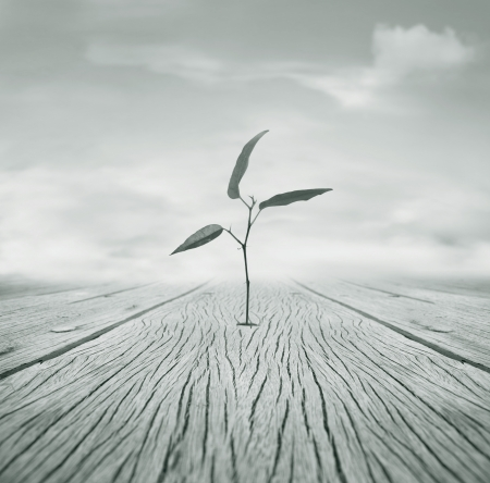 Beautiful poetic black and white image representing a little branch with leaves that grew escaping from a hole in the floor and cloudy sky in the background