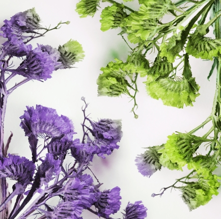 Close up of purple and green dried flowers in white background