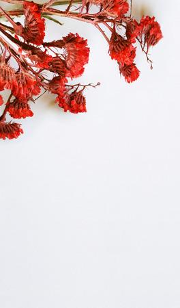 flores secas: Primer plano de flores secas de color rojo en fondo blanco Foto de archivo