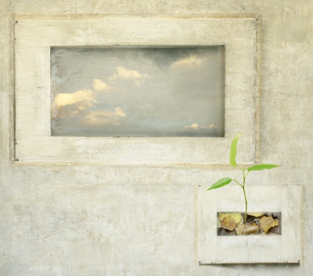 Two surreal window with sky and leaves with plant photo