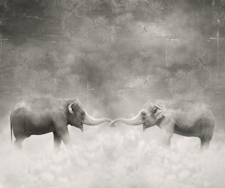 circus animals: Un par de elefantes que mantiene con sus troncos como amantes en blanco y negro y un fondo surrealista