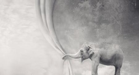 elephant: Voi siêu thực tuyệt đẹp mở ra một bức màn với thân mình trong màu đen và trắng