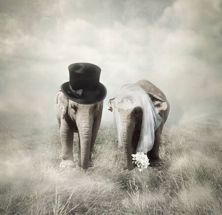 getting married: Elephants that who are getting married in Twenties style Stock Photo