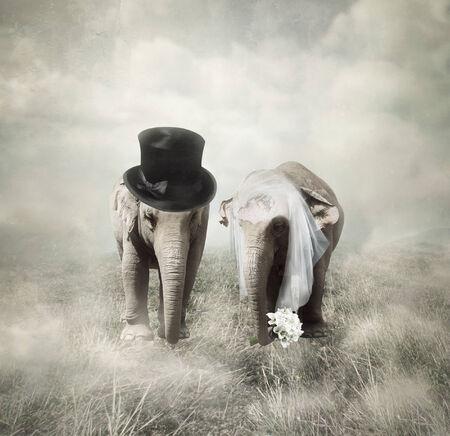 Olifanten die die gaan trouwen in jaren twintig-stijl Stockfoto