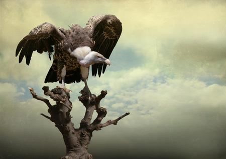 aigle royal: Belle aigle d'or sur un arbre avec des ailes ouvertes dans un beau ciel en arrière-plan