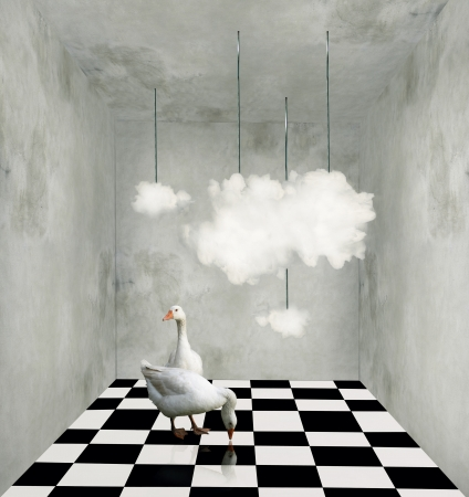 Surrealist room with clouds hanging from wires two beautiful ducks and black and white checkered floor