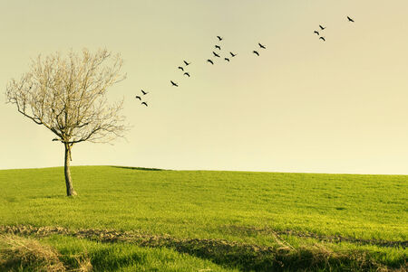 Beautiful poetic landscape with a tree isolated in a meadow and birds flying at sunset