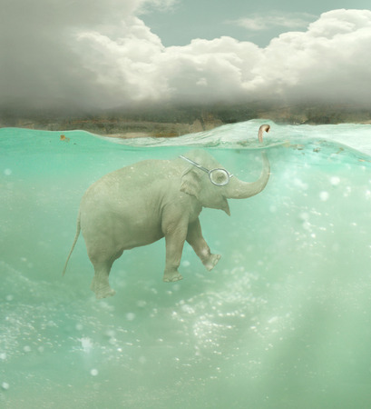 swimmer: Beautiful funny elephant swimmer underwater with a landscape in the background Stock Photo