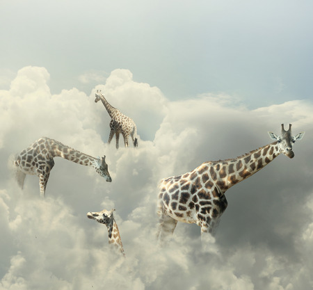 Surreal image representing four giraffe walking in the clouds