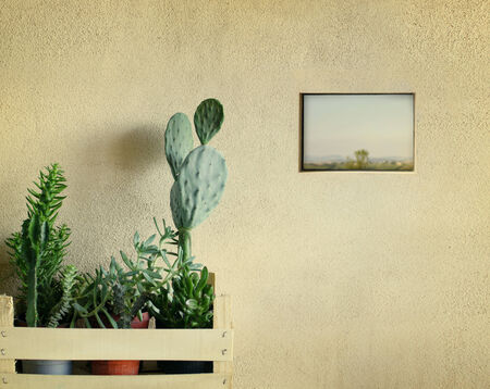 Detail of a few succulents plants in a basket with a little window on country landscape view