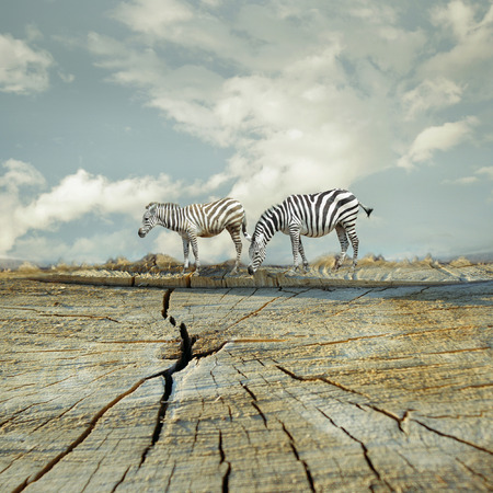 Two zebras in a surreal landscape Stock Photo
