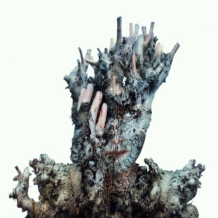 face in tree bark: Surreal image of a face of a girl hidden by a trunk and the bark of a tree on a white background Stock Photo