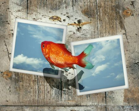 Surreal image representing a goldfish that jump from one photo to another