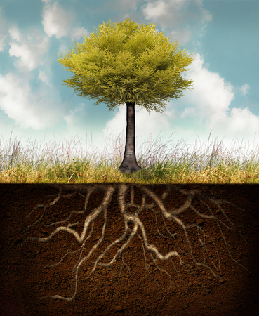 Conceptual image representing a rooted tree above grass with roots underground Foto de archivo