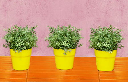 Colorful image of three plants in  yellow vases on orange wooden table