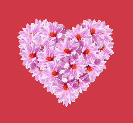 Heart shape of Pink flowers isolated on red background