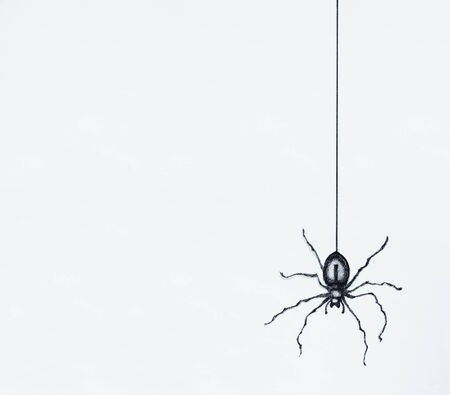 Illustration of a black spider drawn in black and white isolated on a white background