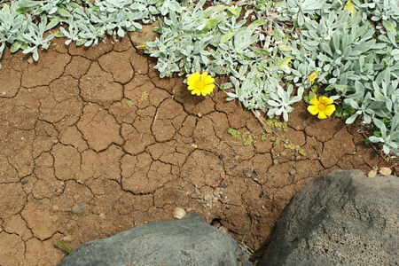 Close up of volcanic plant with yellow flowers