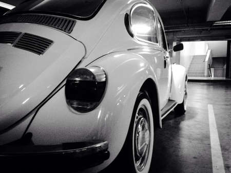 beetle in black and white Stock Photo - 22508645